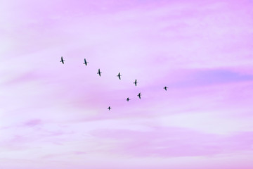 Printed roller blinds Bird Migratory birds flying in the shape of v on the cloudy sunset sky. Sky and clouds with effect of pastel colored.