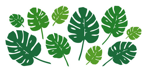 Green Philodendron Leaves Set. Vector.