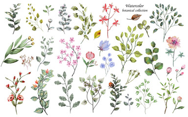Watercolor Botanical collection. Large set: twigs, herbs, leaves, flowers. Wild and garden plants.