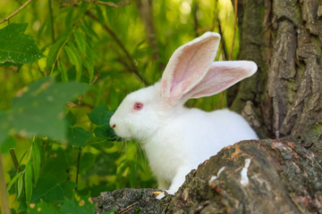 White rabbit sitting on a stump in the forest