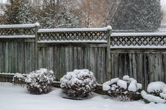 Backyard fence and shrubs in a snowfall