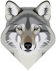 Wolf head face, the gray wolf (Canis lupus) also known as the timber wolf or western wolf mascot vector illustration isolated on a white background