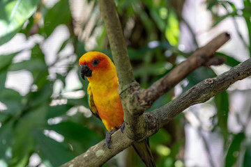 Colorful Parrot in the bird park