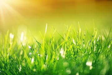 Wall Mural - Fresh green grass background