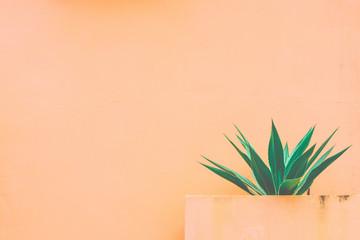 Agave and orange background.