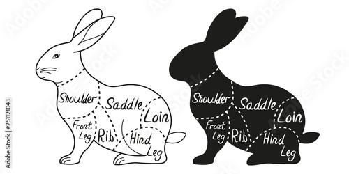 rabbit cuts diagram  cut of meat set  vector illustration
