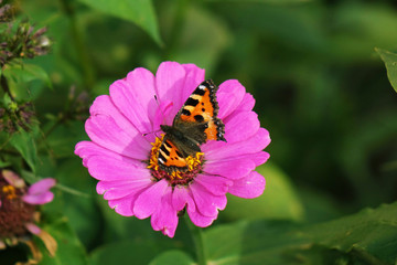 Butterfly on flower. Close up. Beautiful nature background concept.