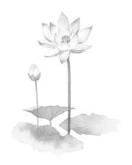 蓮の花 薄墨