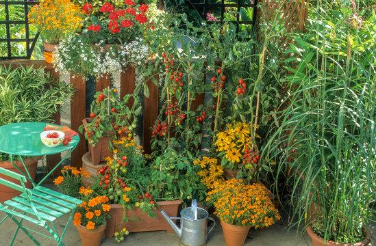 Tomates cerise et fleurs sur un balcon