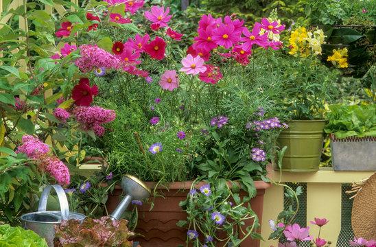 Plantes annuelles sur un balcon