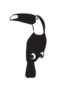 tucan silhouette