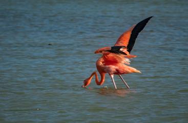 Birds of Jan kok Salt Pans -   Views around the small Caribbean Island of Curacao