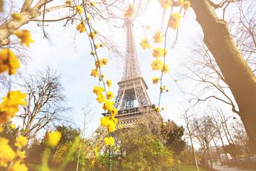 View of Eifel tower through yellow flowers, Paris