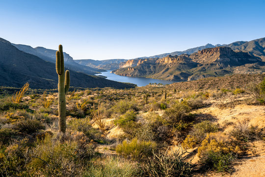 Saguaro cactus on desert land overlooking Apache Lake