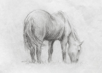 sketch on paper of a horse grassing on meadow.