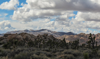 Winter at Joshua Tree National Park, California