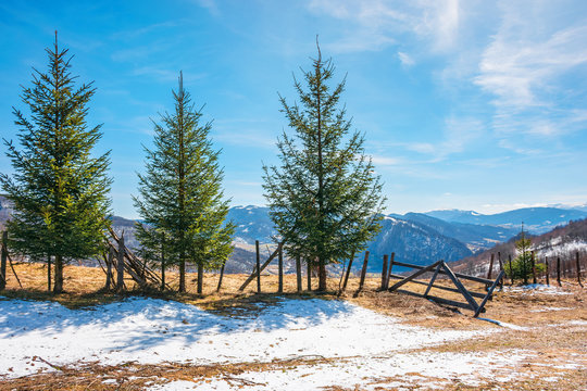 sunny springtime weather in mountain. beautiful carpathian rural landscape. spruce trees near the wooden fence on the meadow with  melting snow on weathered grass. village down in the valley