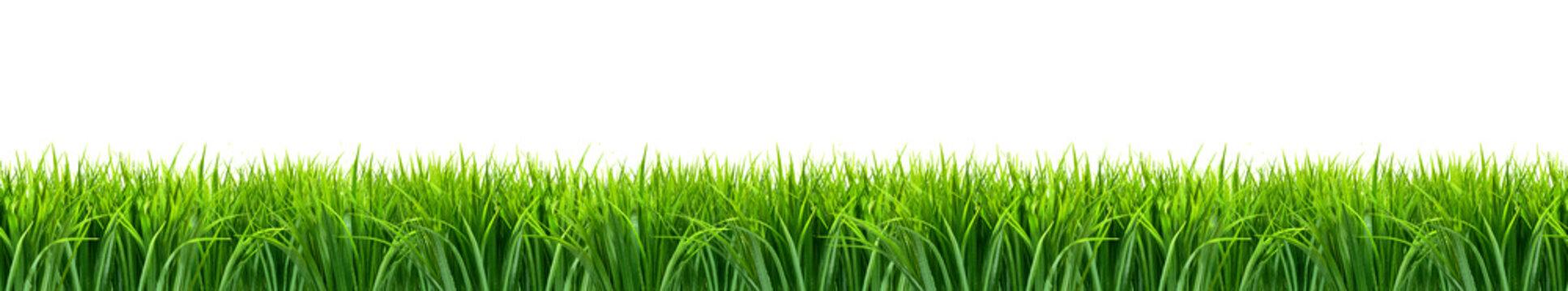 Trawa panorama z białym tłem