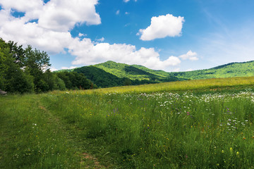 summer countryside in mountains. path through grassy meadow and forest. wonderful sunny weather. fluffy clouds on the blue sky.