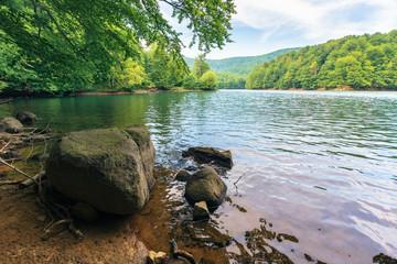 summer in slovakian vihorlat region. beautiful scenery among the primeval beech forest. rocks on the shore of the lake Morske Oko
