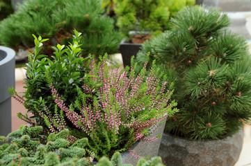 Obraz Rośliny na tarasie - fototapety do salonu