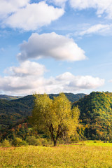 tree on the rural field in mountains. beautiful countryside scenery in early autumn. simple vertical composition. sunny evening with fluffy clouds on a blue sky