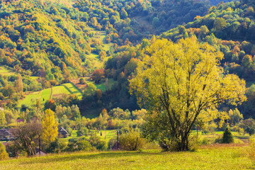 tree on the rural field in mountains. beautiful countryside scenery in early autumn. village in the distant valley. beautiful vivid colors