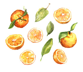Watercolour hand painted summer fruit oranges and leaves illustration set on white background