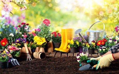Gardening - Equipment For Gardener And Flower Pots In Sunny Garden