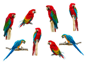 Foto op Plexiglas Papegaai Macaw parrot isolated on white background