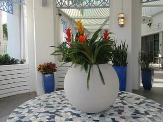 bromeliads in white pot