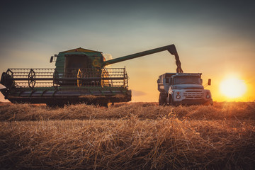 Wall Mural - Combine harvester machine working in a wheat field at sunset