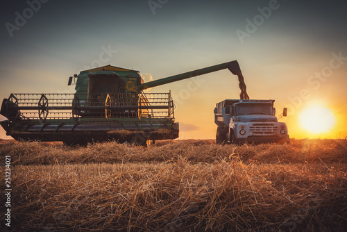 Wall mural Combine harvester machine working in a wheat field at sunset