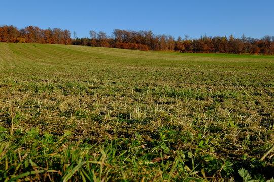 Feld und Wald im Herbst, Andechs, Bayern