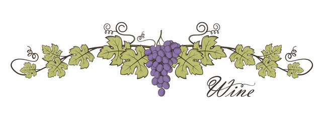illustration of grape bunches with leaves