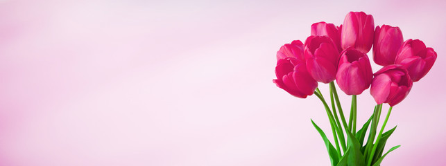 Panoramic light pink background with bouquet tulip flowers