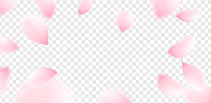 Pink sakura petals falling flower vector isolated background. Romantic blossom sakura flower petals
