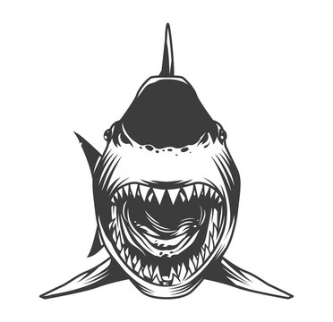 Angry shark front view template