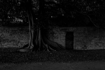 spooky old tree and wall at night