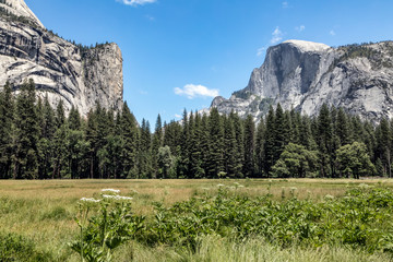 Half Dome from Valley Floor - Yosemite National Park, California