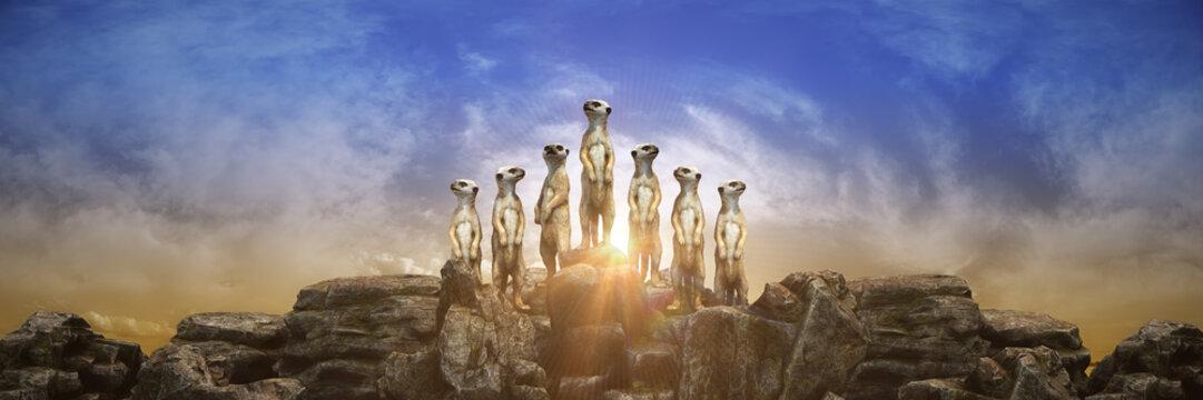 meerkat at sunset. 3d rendering