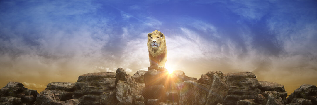 Lion at sunset. 3d rendering