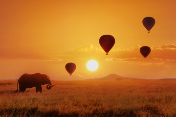 Lonely  african elephant against the sky with balloons at sunset. African fantastic image. Africa, Tanzania, Serengeti National Park. Summer wonderland.