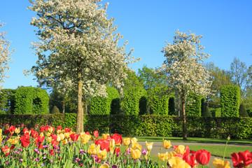Fotoväggar - Frühling im Keukenhof in Lisse, Holland