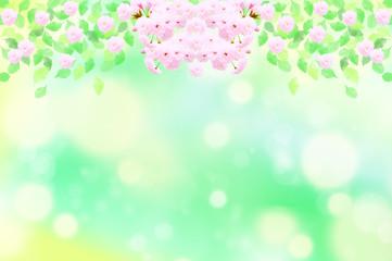 八重桜の花と緑の葉 水玉,バブル,光のバックグラウンド
