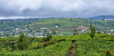 Beautiful vast fields of tea in Nuwara Eliya - Sri Lanka
