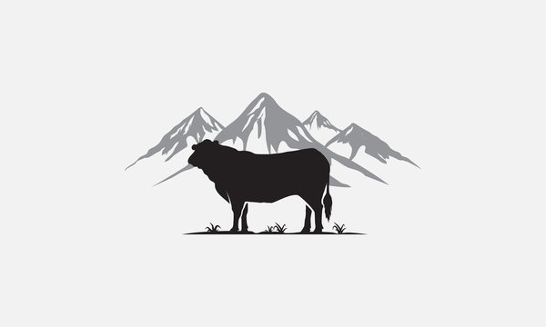 black angus logo design, beef angus