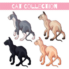 Vector pets: bald cats of different colors.