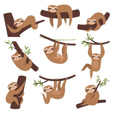 Sloth on branch. Cute little kid sleepy animal on branch in zoo playing with baby hanging vector characters cartoon. Sloth lazy character, sleepy and laziness illustration