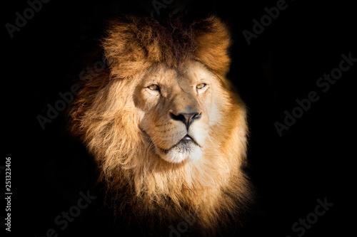 Aufkleber Detail portrait lion on the black background